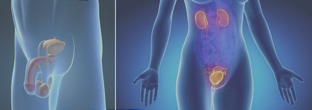urologo incontinencia urinaria enuresis cancer de prostata disfuncion erectil varicocele calculo renal infeccion urinaria cistitis